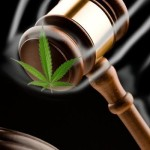 Colorado Medical Marijuana and Probation - An Analysis Of A New Law In 2015